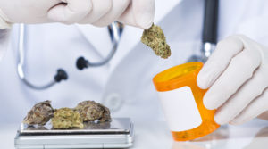 Unrecognizable senior doctor dispensing cannabis from scale to bottle